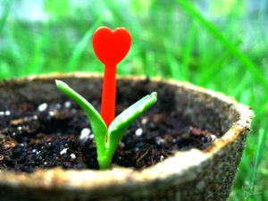 Growing Your Love